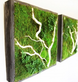 artisan moss plant paintings preserved living wall for your home office. Black Bedroom Furniture Sets. Home Design Ideas