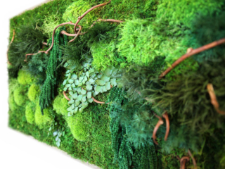 Artisan Moss natural winding vine with mosses and ferns