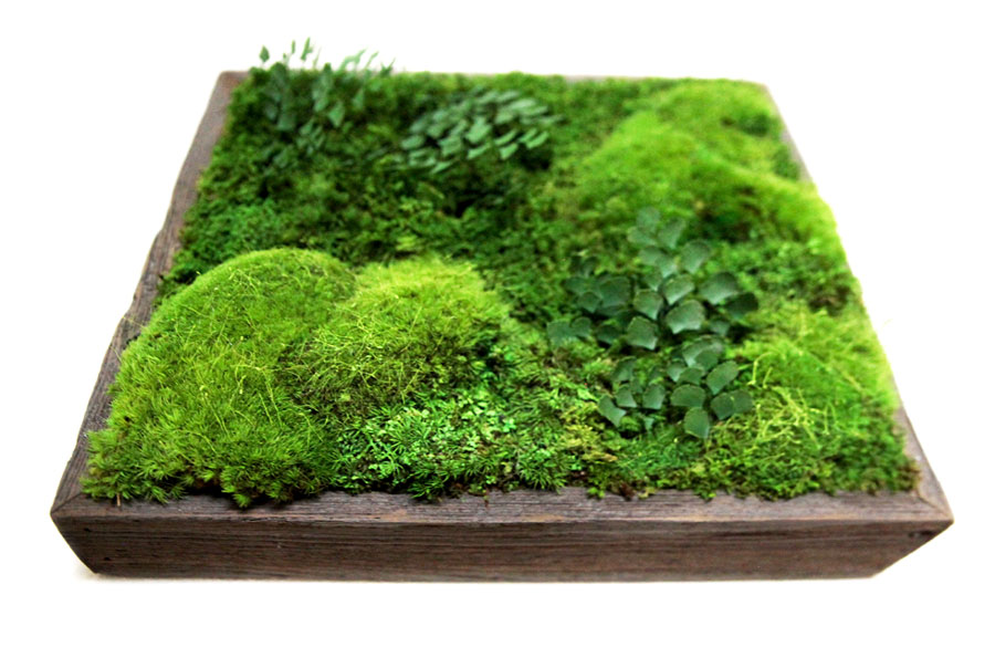 "Moss and ferns in a 14x14"" reclaimed wood frame by Artisan Moss."