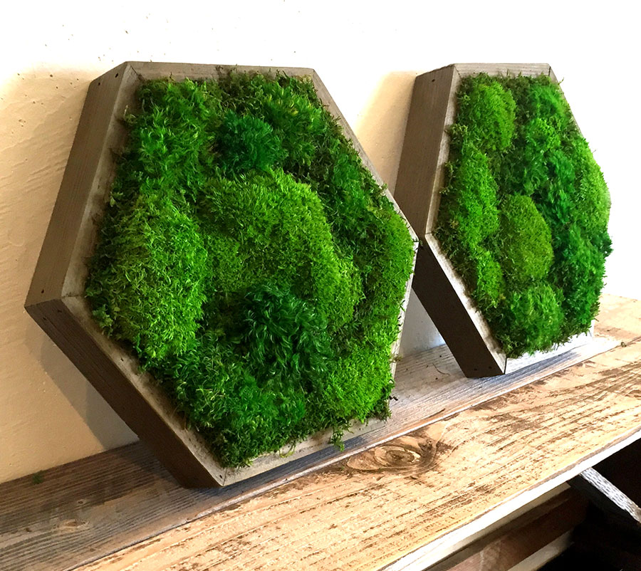 Artisan Moss hexagonal frame can add interesting angles to any room.