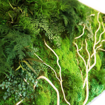 Artisan Moss white wood, ferns and mosses add natural beauty to any environment